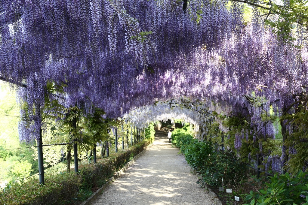 EGHN – Le jardin Bardini – Sept siècles d\'histoire florentine