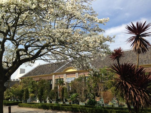 Botanische Tuin Leiden : Eghn u2013 hortus botanicus leiden u2013 een groene oase in de stad